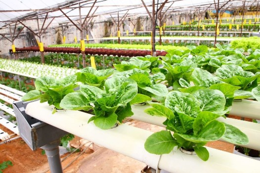 What is Hydroponics and its Benefits?