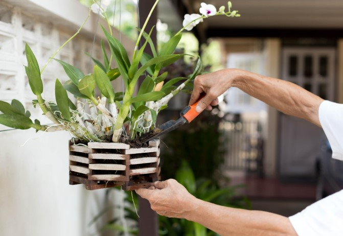 How to Fertilize Orchids?